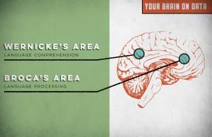 Brein en feiten